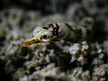 Dinkiest