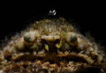 Grumpy old man 😁 Crab with Retra snoot  (Calappa gallus)  Nikon D7200  Tamron 90mm + subsee+10