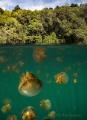 Jellyfish lake, Kakaban Island