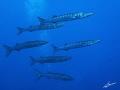 Barracudas ISO125 f/4 0 1/124s