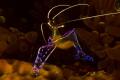 pederson shrimp canon 60D  canon lens 60mm seacam housing  two ikelite strobe DS125.