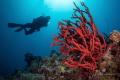 Red Sea uwseascape