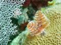 Christmas tree worm, taken of St John