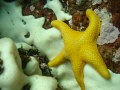 Little starfish taken on seal rock, a diving point close to Gansbaai - South Africa