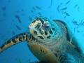 turtle ....