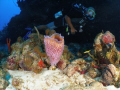 my buddy rodney in the new dive site in parguera wall....