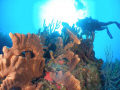 parguera beatiful dive site!!!!!!!! come and dive!!!