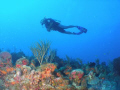 flying high at chimney dive site in parguera wall,,,come and dive!!!!