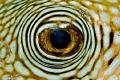 I'm looking at you! Raja Ampat / West Papua