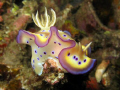 This beautiful nudibranch was perched on the tip of a staghorn coral. Who could resit this shot? Canon A640