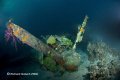 Emily Flying Boat-Engine in corals-Truk Lagoon
