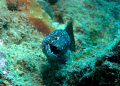 Even Moray's have a bit of a laugh