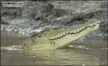Smile for the camera !