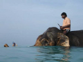 Rajan the Elephant swimming at beach No 7 in the Andaman Islands, India.