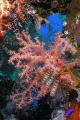 Soft corals taken in Ras Mohamed Park with Olympus SP350.