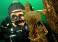 Diver and crab, Puget Sound, Seattle.