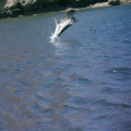 Loreto Bay, Mexico. Pelican going for lunch.