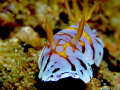 Balai Resort House Reef - Anilao Batangas Philippines.