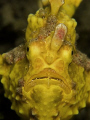 Frowning Froggie! Taken in Lembeh with Canon G9.