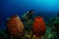 Diver with sponges