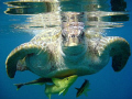 All aboard! Morla, my favourite turtle.