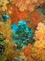 Orange symphony, soft coral