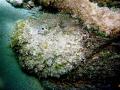 Big Stonefish