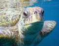 Morla, my favourite turtle