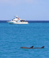 Local dive boat and dolphins