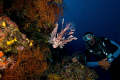 Follow the Mo,Moses works as a Dive Guide on Fiji Aggressor