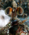 Juvenile mantis eyes before they get their characteristic criss-cross look