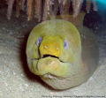 Moray Eel in the sea of Cortez....