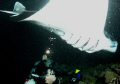 The Show. Kona, Hawaii. Manta night dive. Taken with a Sea and Sea DX-1G with two strobes. Aperture 2.5, Shutter Speed 200. 