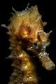 Seahors Oosterschelde