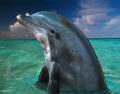 Dolphin in the Bahamas