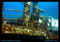 The Sea Star ship wreck in Grand Bahamas.