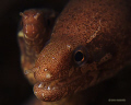 This moray was posing for me.  The smaller one was a bit shy.