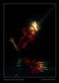 Underwater fine art image photographed in swimming pool and finally turned