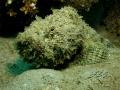 Taken on the Great Barrier Reef, Australia