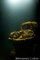 Mask in the interior of one of the many wrecks of Truk Lagoon, Micronesia ©Amanda Cotton