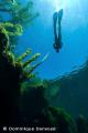 Yukatan cenotes snorkeling