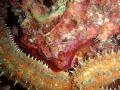 Huge Seastar m1030SW Olympus