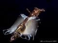 Aplysia fasciata, Canon G9, Sea&Sea YS110