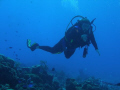 Diver Drifting on the a Cozumel drift dive