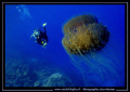 Jelly Fish - and in the back-ground, my wife.... Like we say in French : Que du bonheur... :O ...