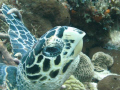 Hawksbill I almost ran into