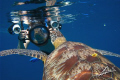 a very VAIN turtle and a big camera PAPARAZZO!