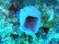 brittle star in azure vase sponge- unexpected florescent color combination