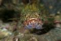 Fearsome Lizard Fish!