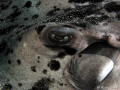 The cold look of stingray